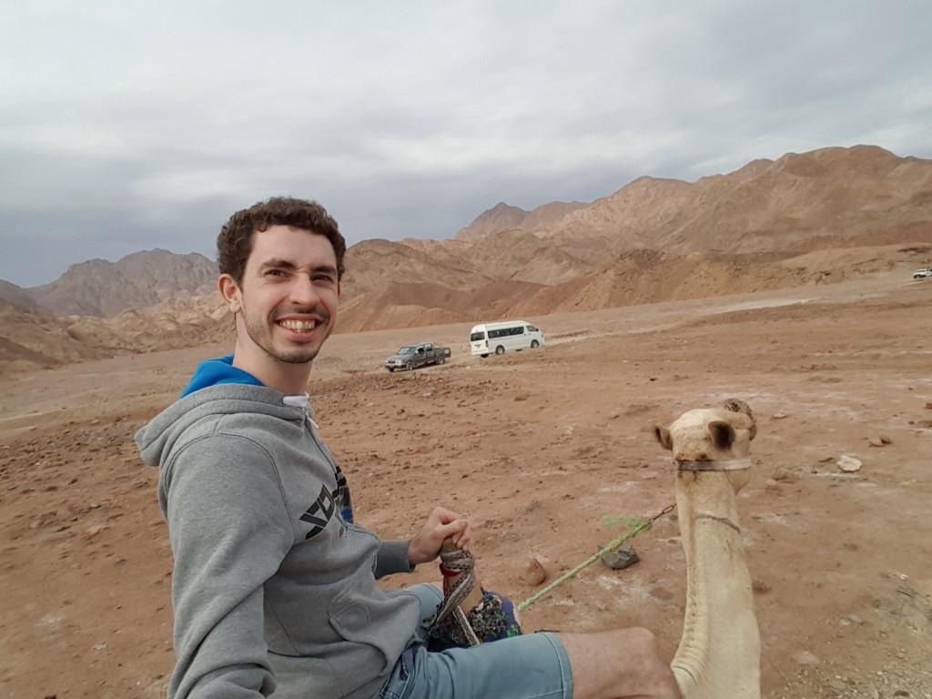Egypt, верблюд